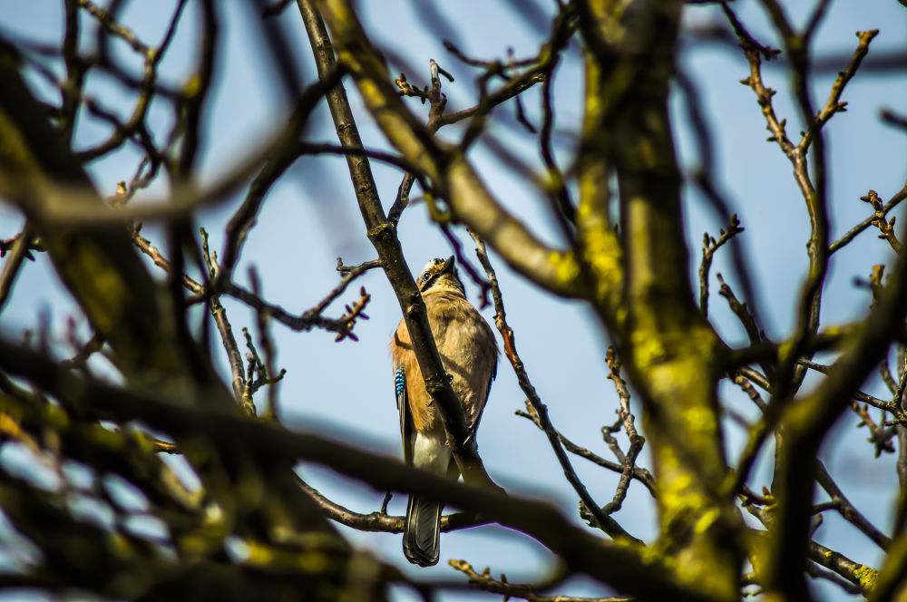 Vogel auf dem Ast by Andreas Dercho