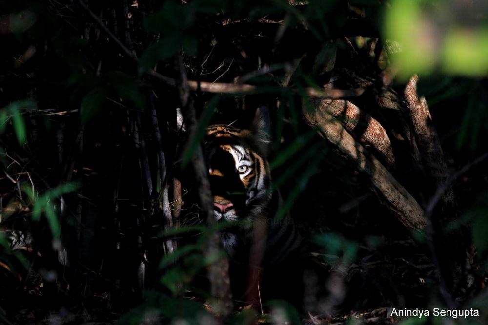 Photo in Random #tiger #animal #wildlife #wild #forest #india