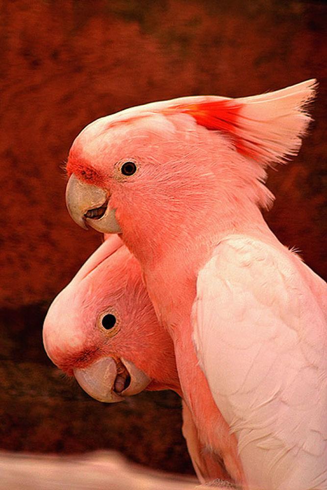 pinky Bird by dejona79