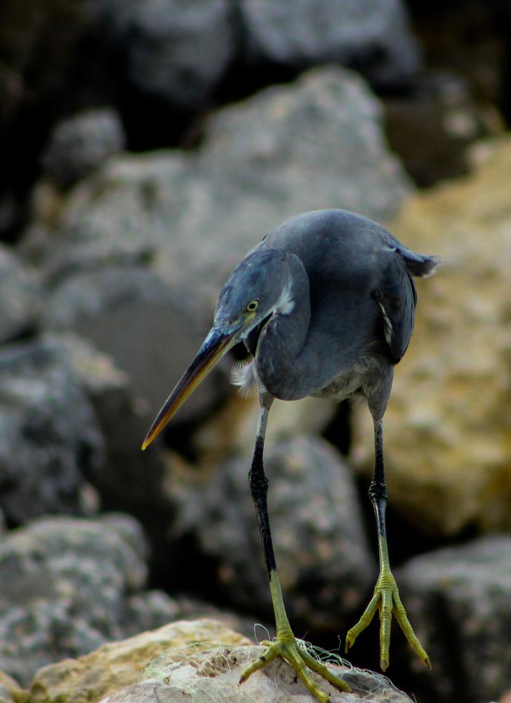 Photo in Animal #bird #fiy #sea #beach #afternoon #animal #photograph