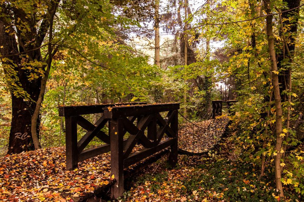 Hängebrücke - Swing bridge  by ruthchudaskaclemenz