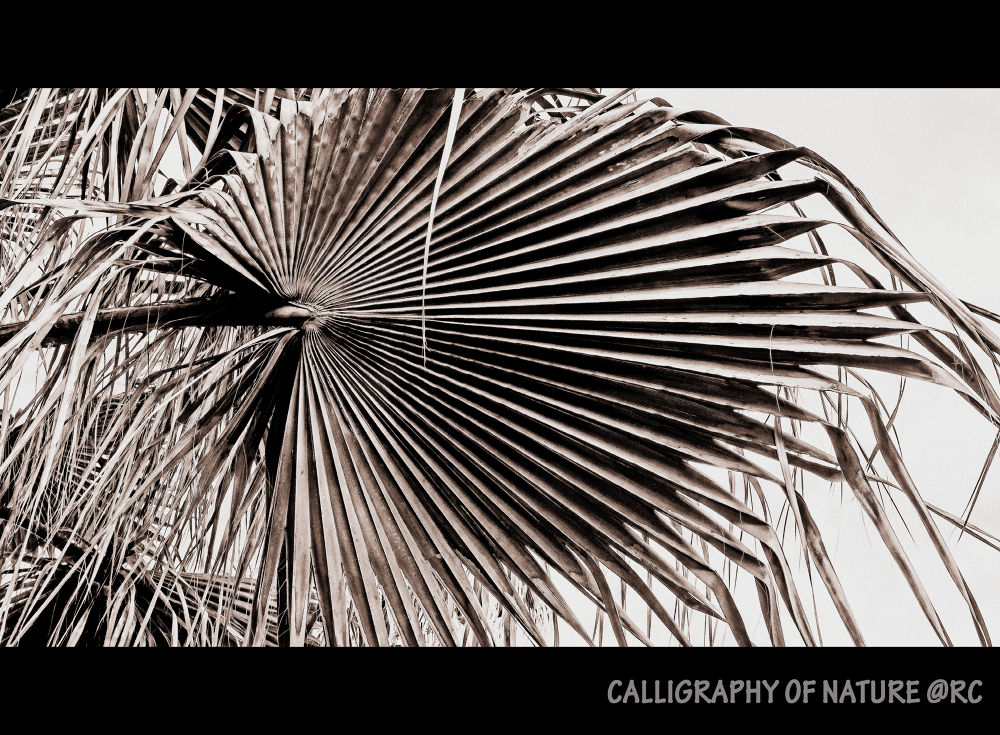 Calligraphy of nature by ruthchudaskaclemenz
