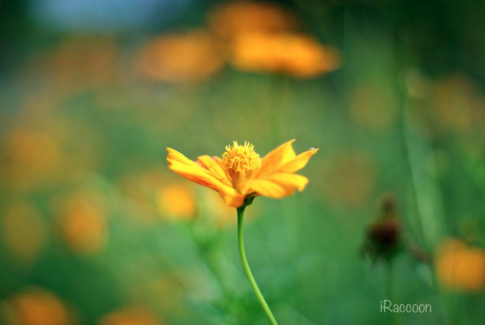 Yellow Alone by Nouvel Raka