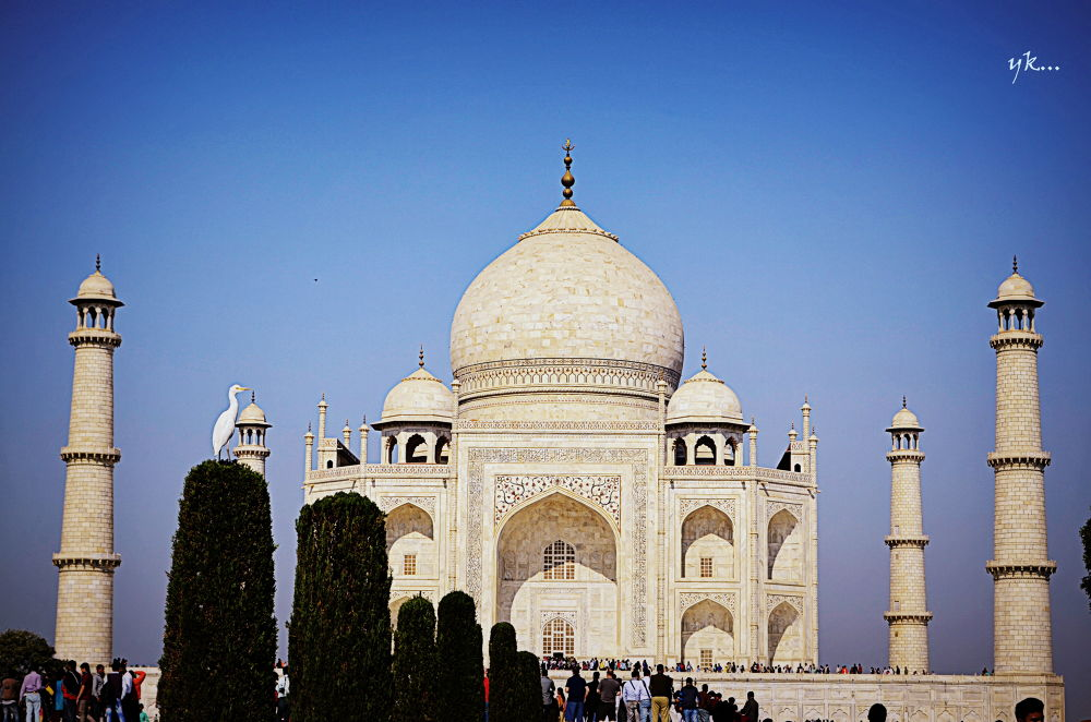 "Bird posing for the ""Taj Mahal Kiss"" by Yags"