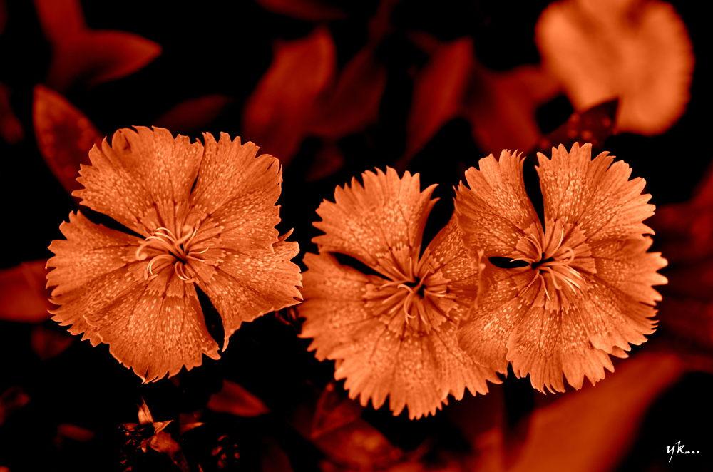 BEAUTIFUL FLOWER by Yags