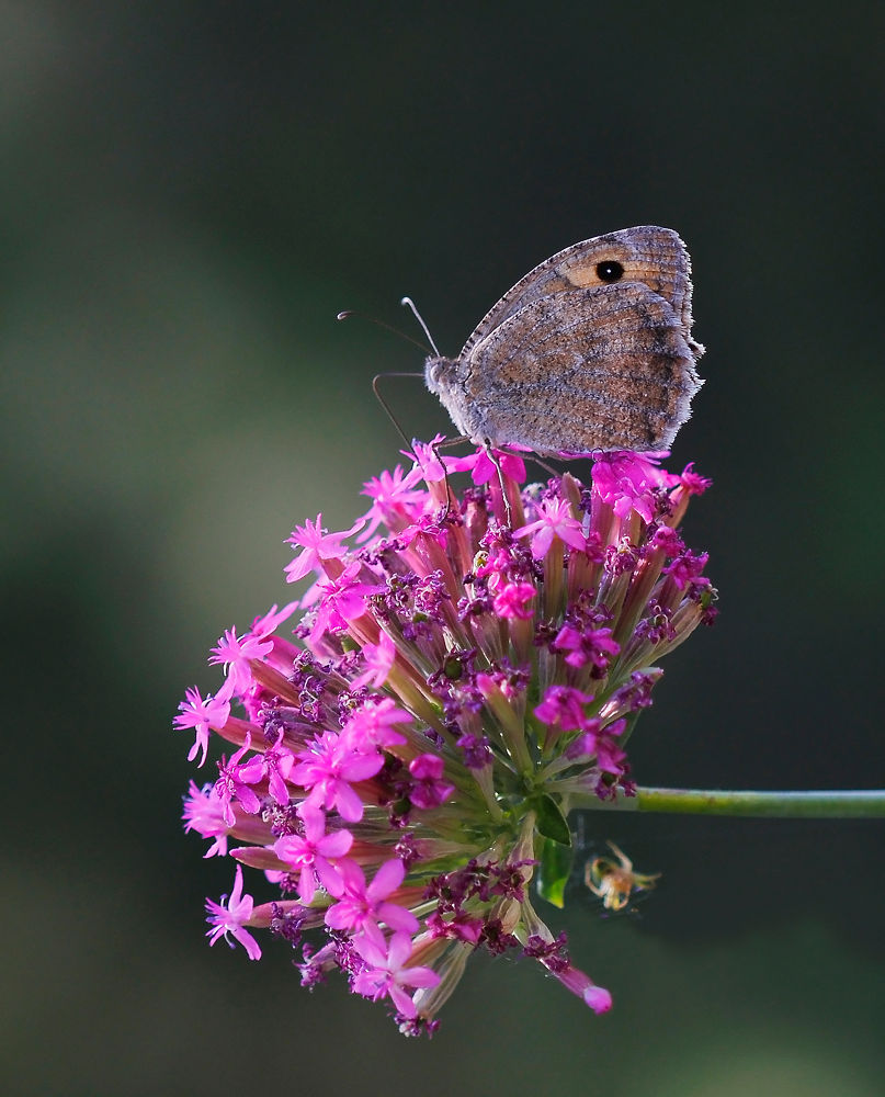 Flower and Butterfly by Turan Arslan