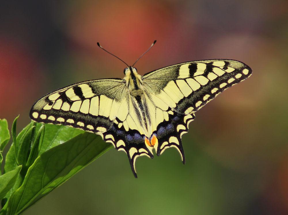Photo in Macro #butterfly #macro #nature #papillion
