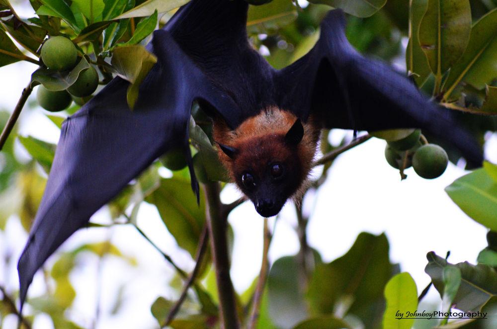 Bat by Patrick Schubert