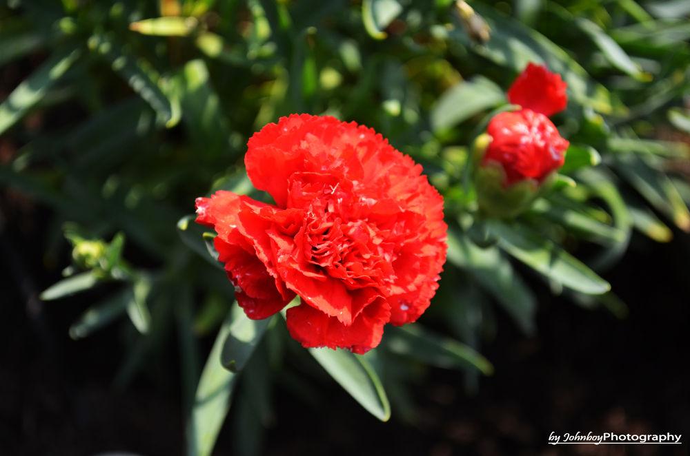 Another Flower by Patrick Schubert