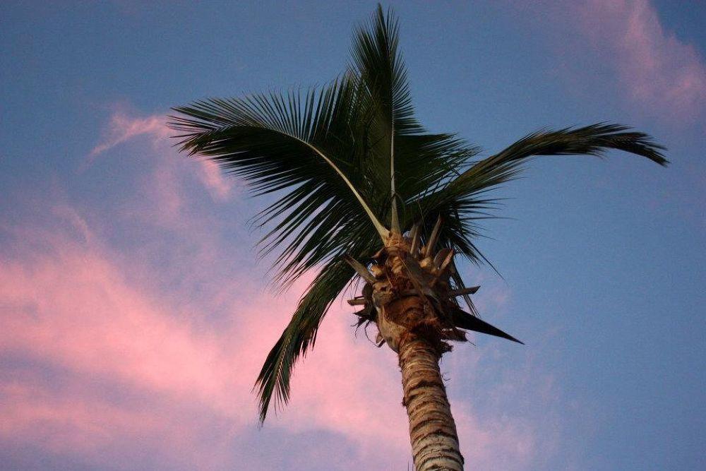 Palm by SofiesFoto