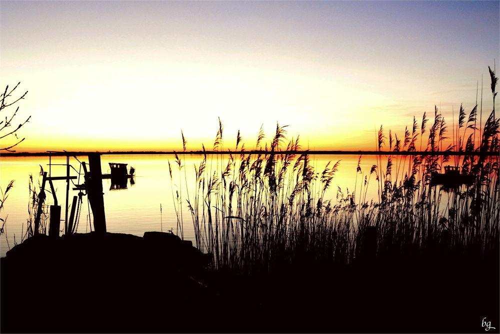 Silhouettes at dawn by Bernard Guillon