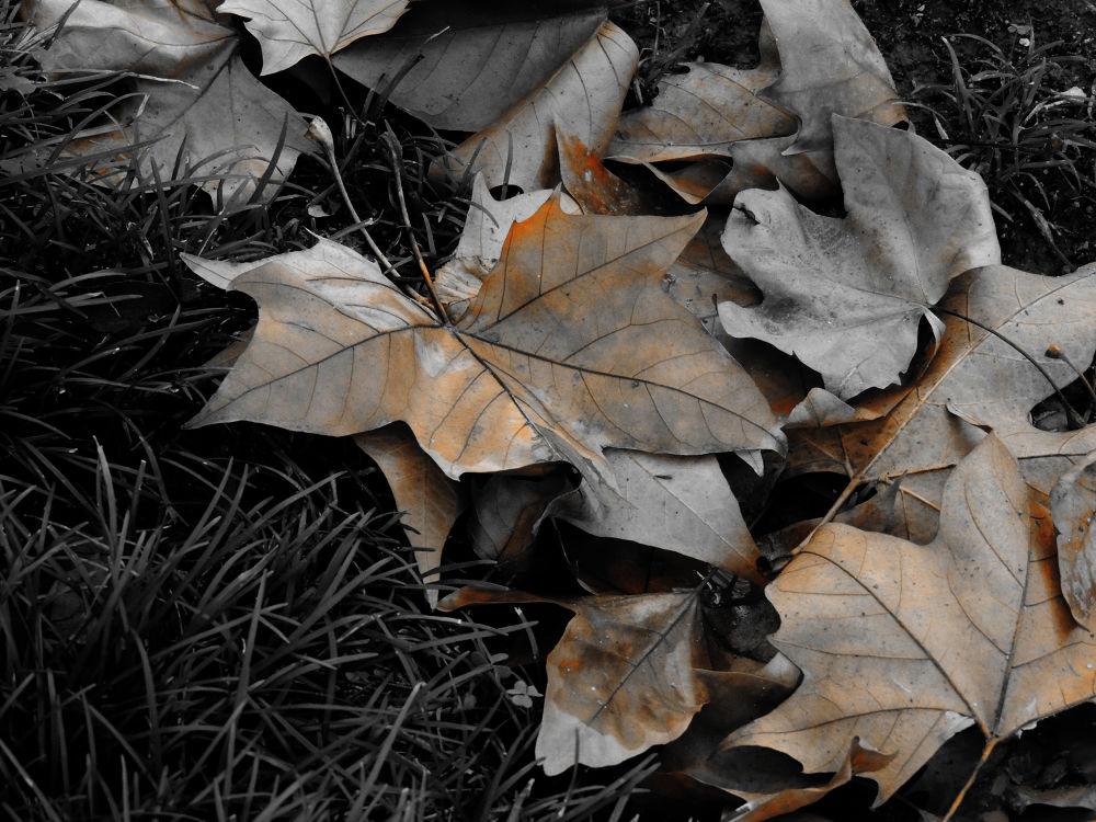 Autumn by Joao Pedro Pereira