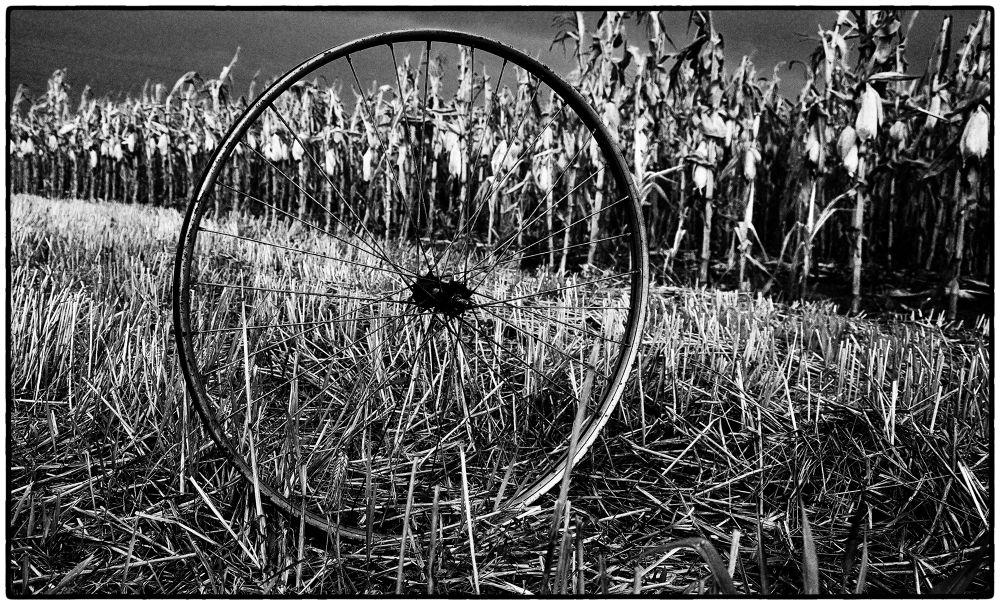 wheel by Jelena Jovic