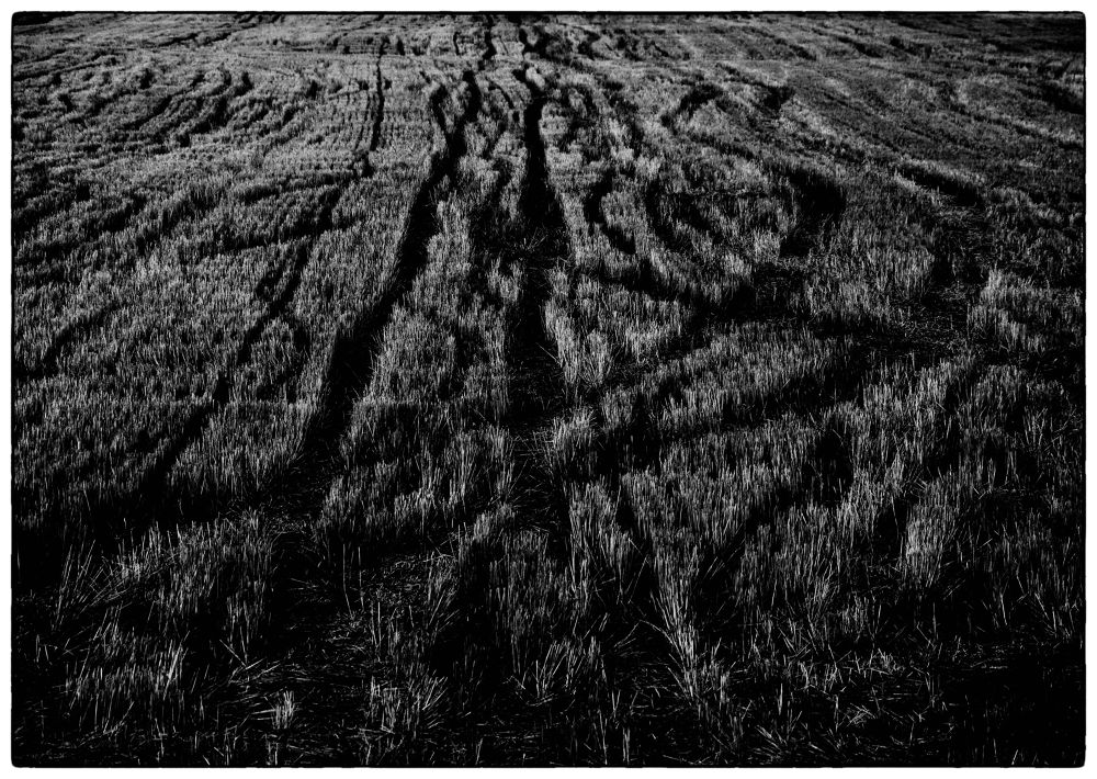 The traces by Jelena Jovic