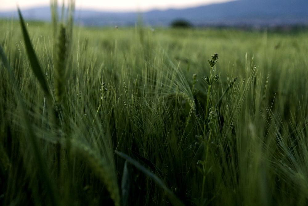 green by Jelena Jovic