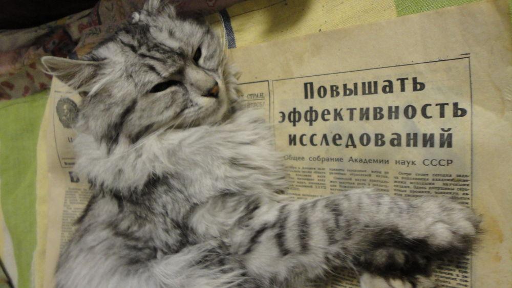 повышать МИЛЯ by Dmitriy Sokolov