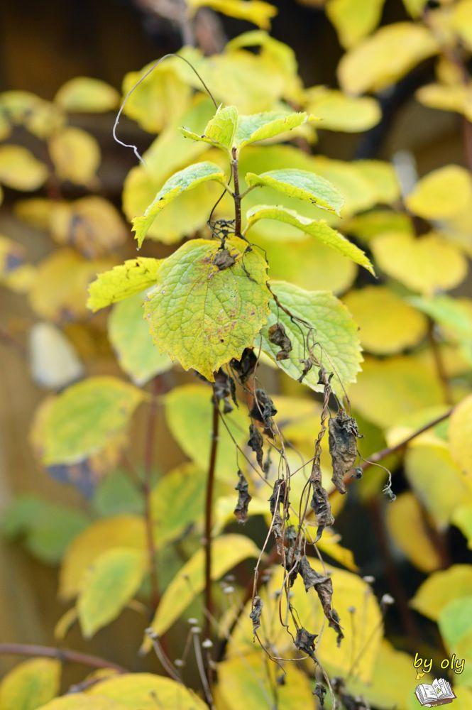 autumn by mihaitaolarean