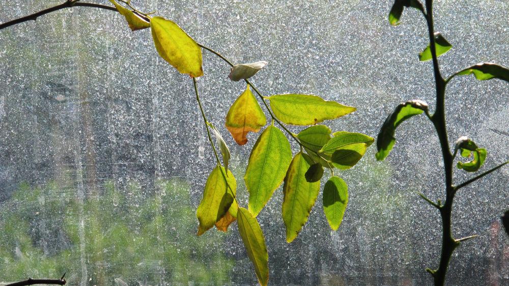 Autumn leaves by Giuseppe la Rossa