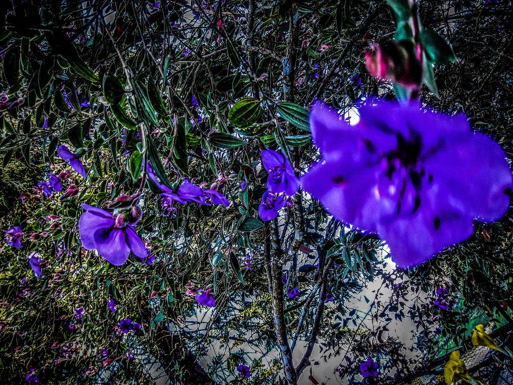 bunga unggu by aren735