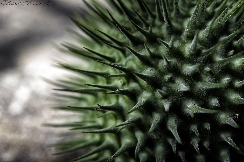 fruit de natura by chris-a