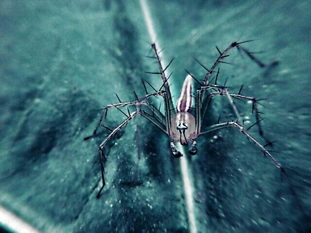 Photo in Animal #animal #spider #hdpi #st15i