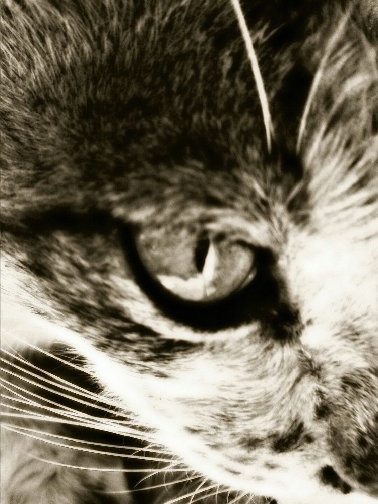 Photo in Random #cat #animal #black #white #hdri #face #indonesian #be a fan
