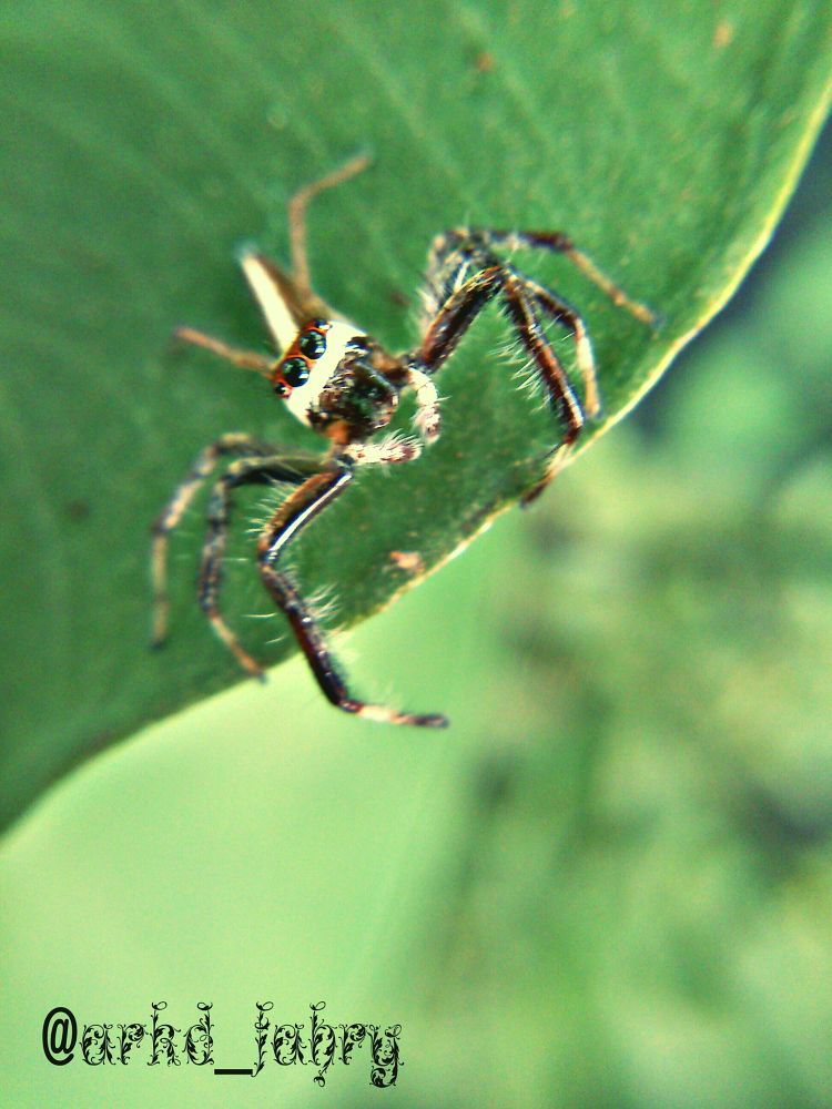 Photo in Random #small #spider #animal #nature #red #scary #indonesia #macro #be a fan