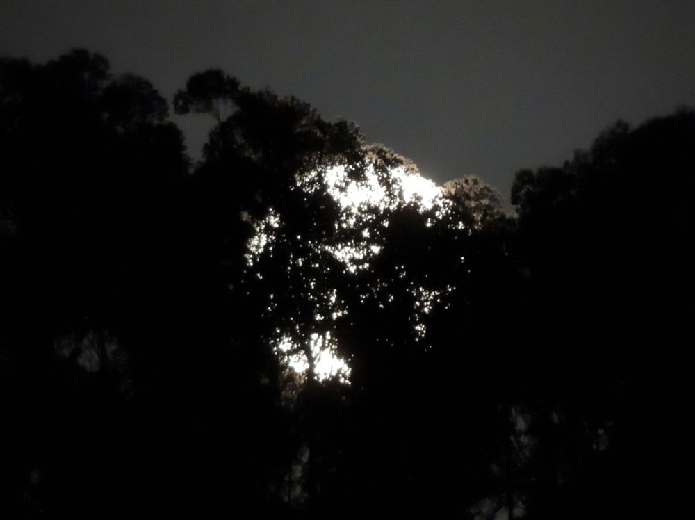 Moonrise over Sedgefield by mikeh46