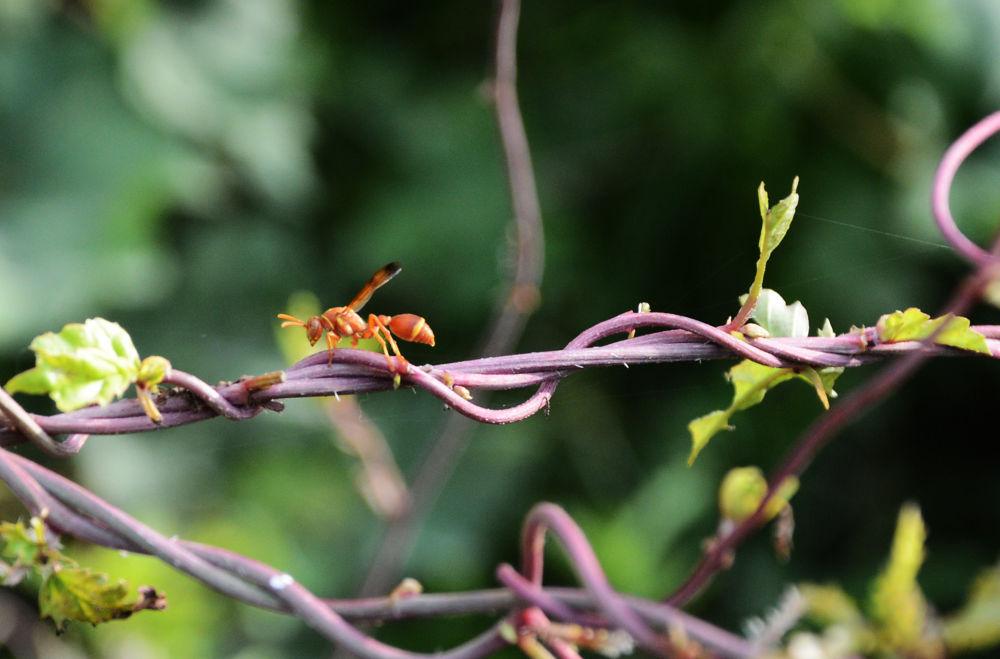 fly by prabhuviswa