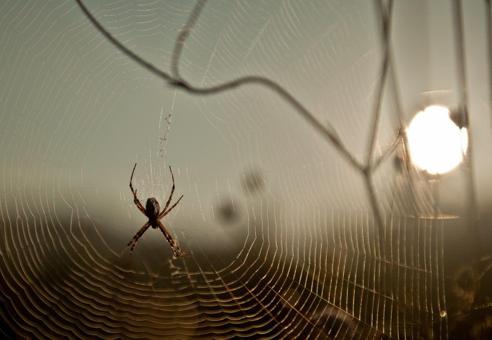 Spider in sunrise by henrikhenrikhansson