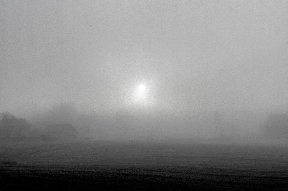 Photo in Nature #fog #norway #akershus #black and white
