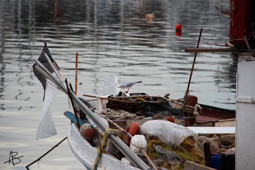 Photo in Travel #ypa2013 #gull #sea #boat #cockboat