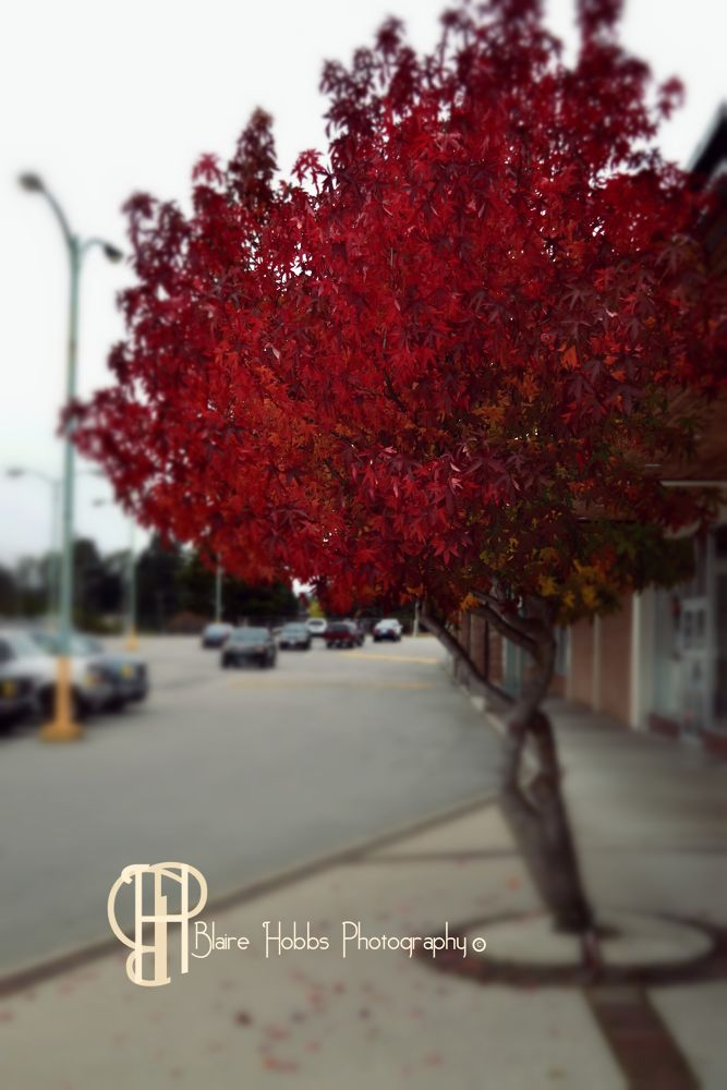 Red Leaves by blairehobbs