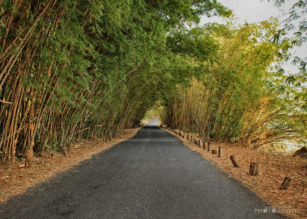 Road Bamboos by DavidJPhoto