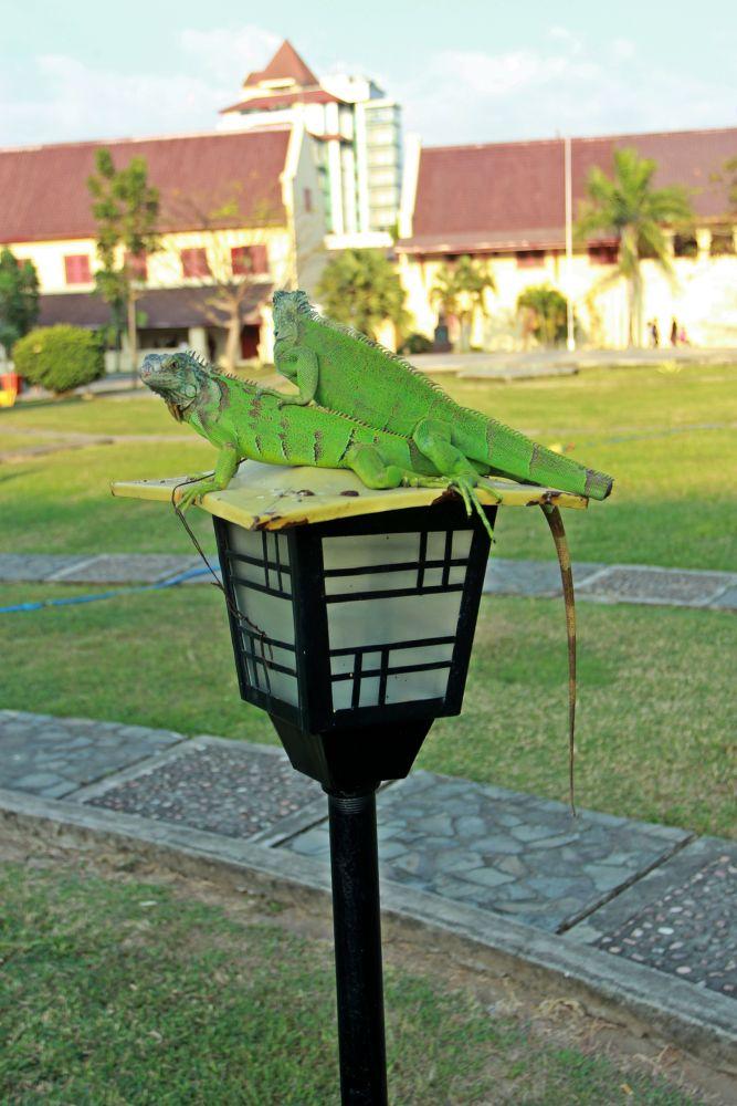 Photo in Animal #animal reptile