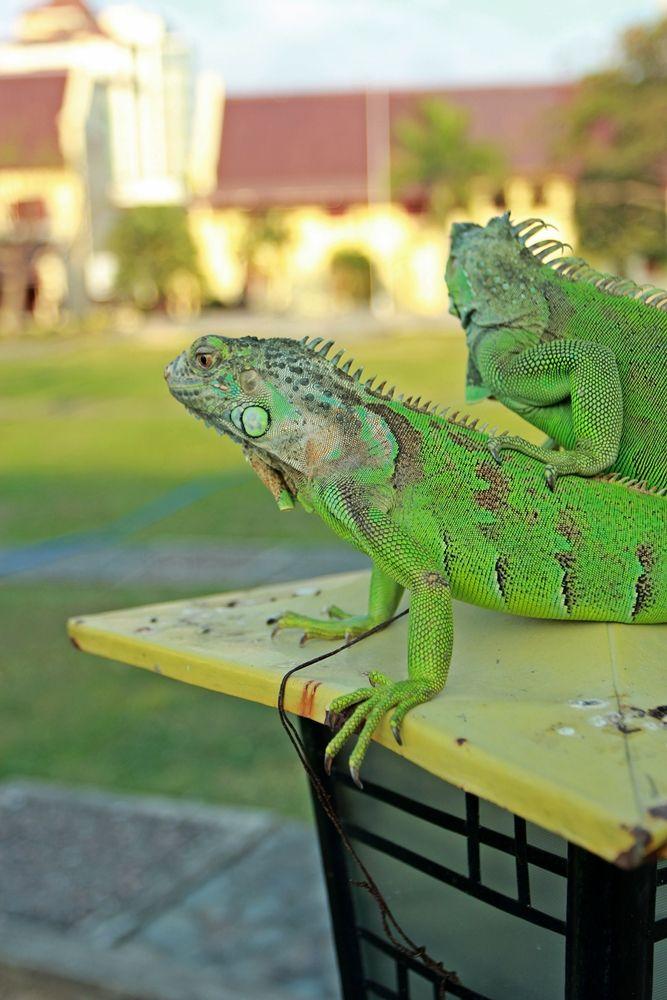 Photo in Animal #reptile