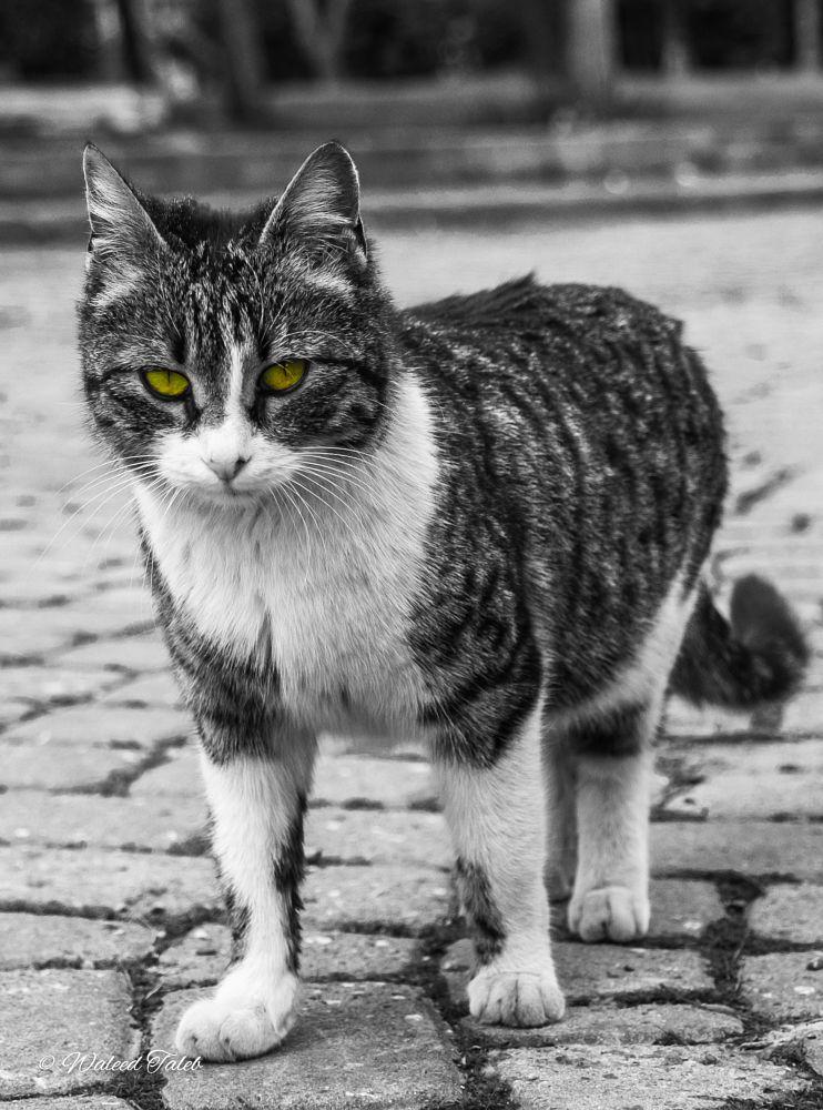 That look! by Waleed Taleb