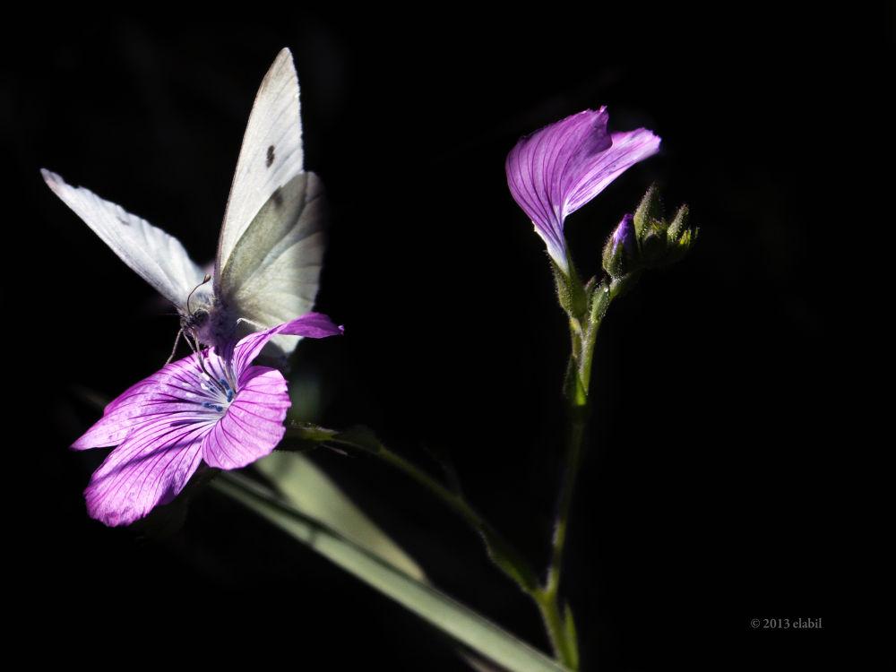 De flor en flor by eduardolatorre712
