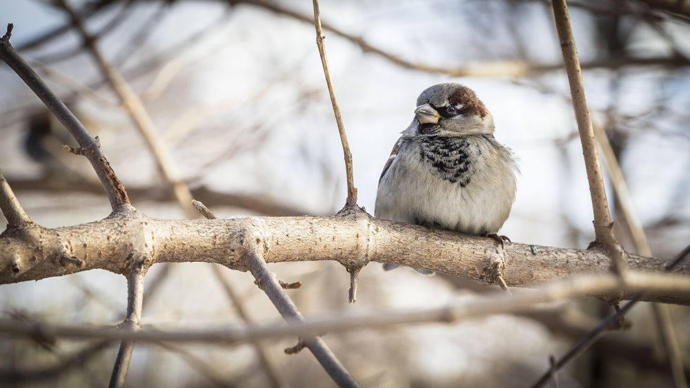 Rugged up finch by Michelle Foong