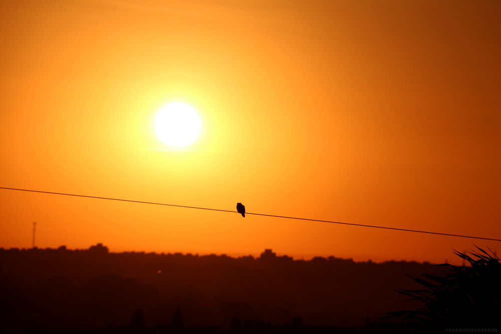 Photo in Random #bird #sky #orange #sun