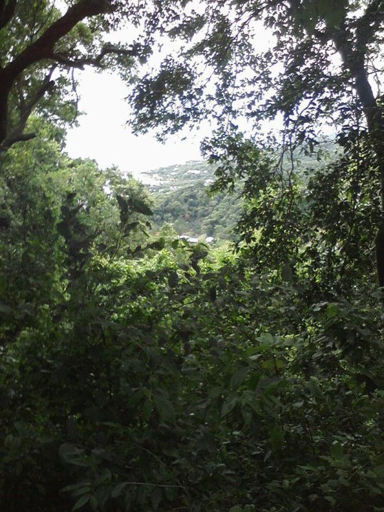 honduras jungle 4 by TellOfVisions