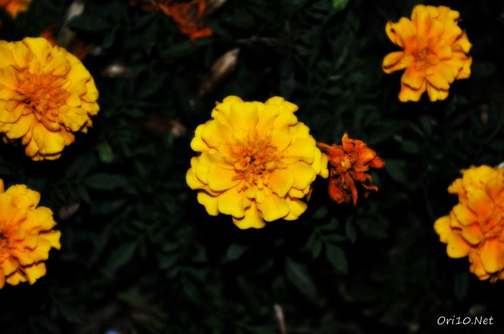 DSC_0306 by Ori10