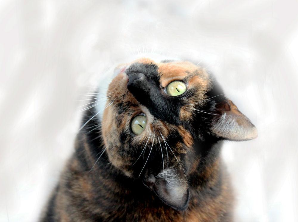 Cat by heiwapictures