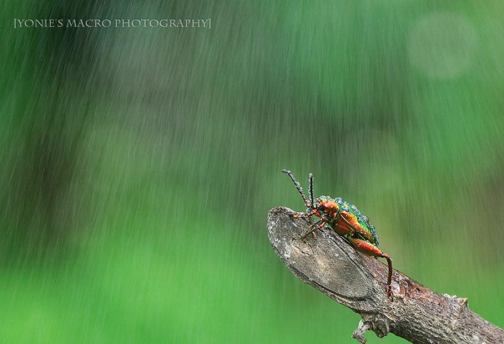 Hard Rain by yoniearliandisetiyawan