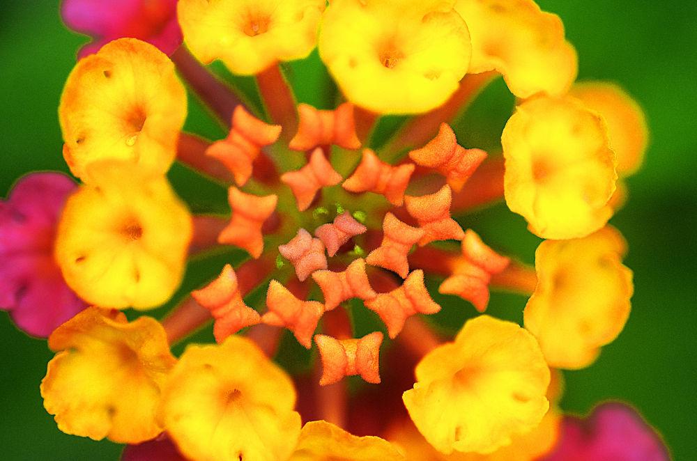 Flower Close Up by jesumjr