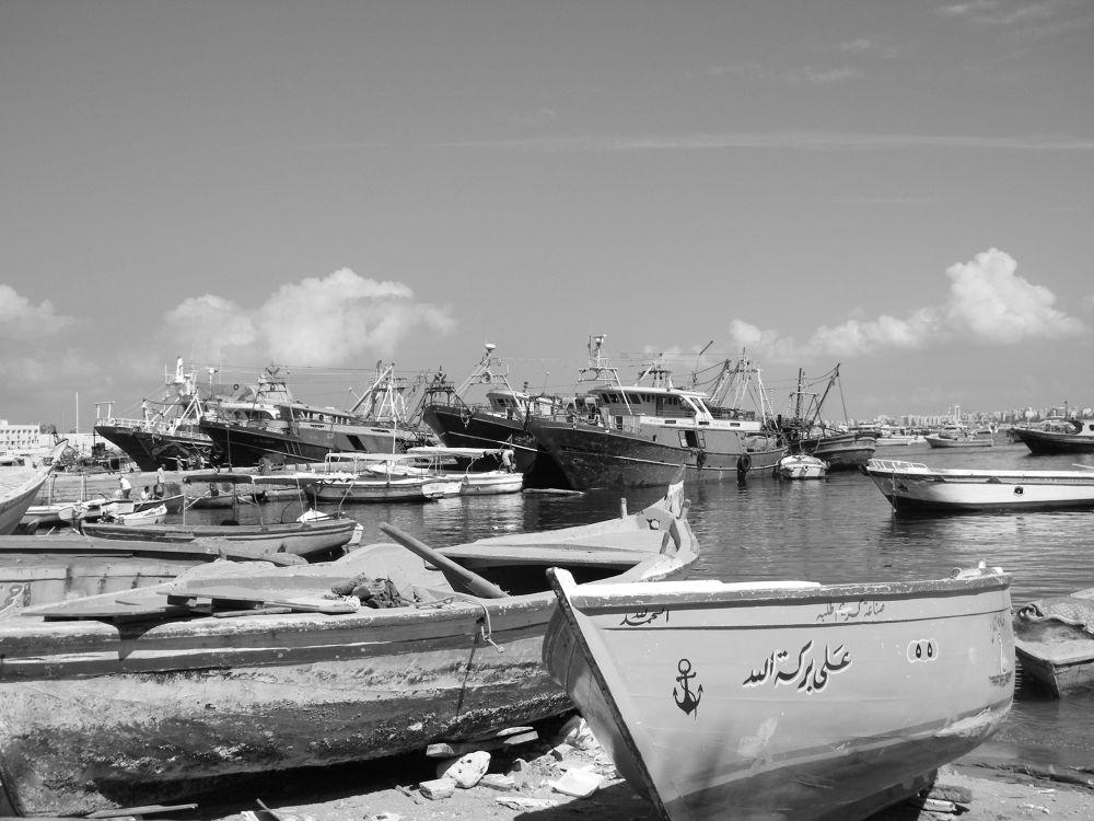 DSCF3364 by elhamy