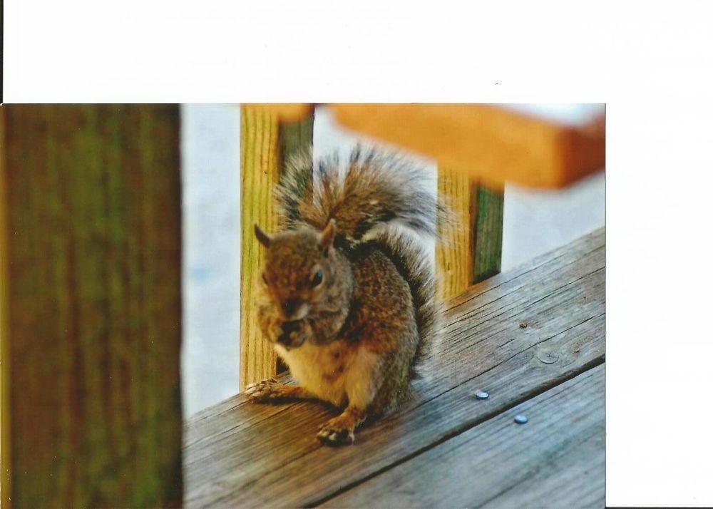 Photo in Random #squirrel