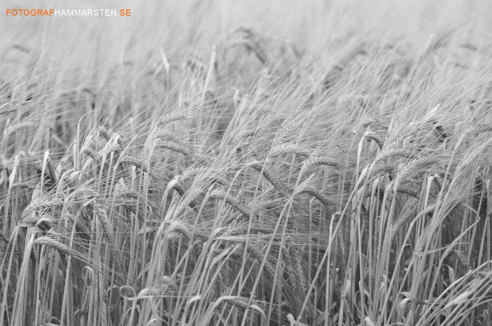 fields1 copy by tommytechno