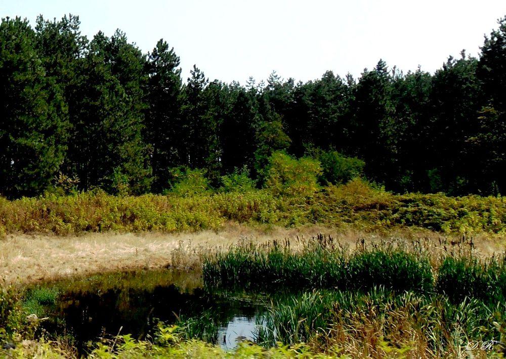 swamp by Драгана М. Реџић