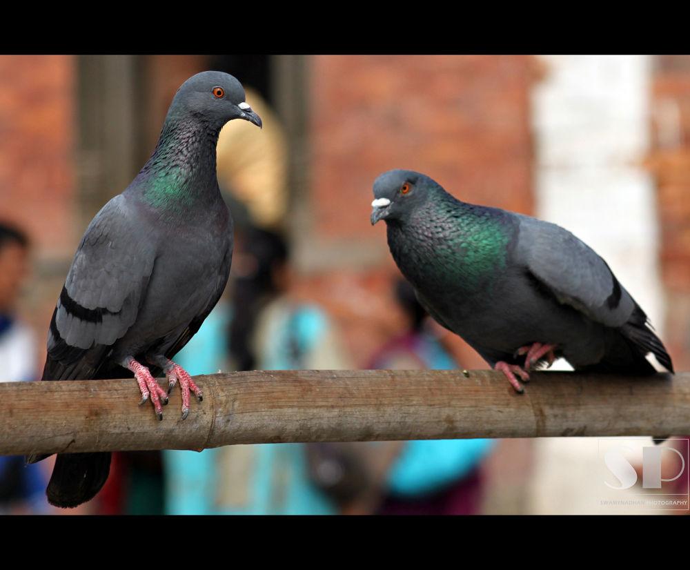 birds by swamynadhan167